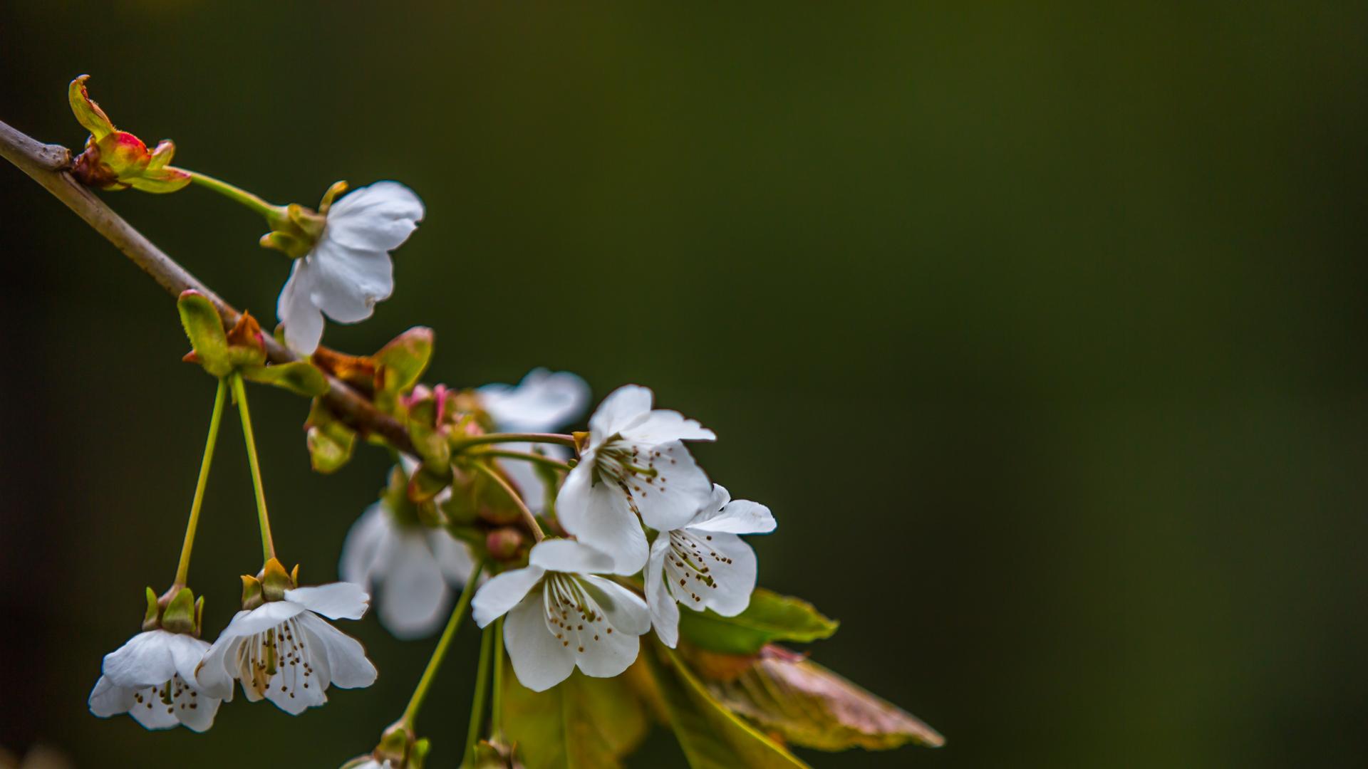 SpringCRD